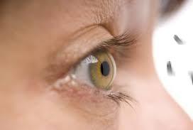 moscas-oculares-en-la-vista